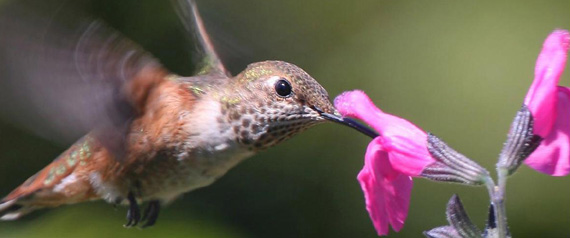 "Top Secret SEO Tips, aka ""Waiter there's a Hummingbird in my search"""